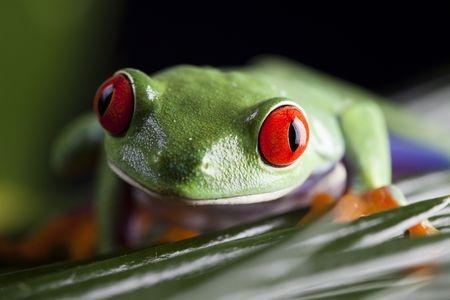toad on a leaf