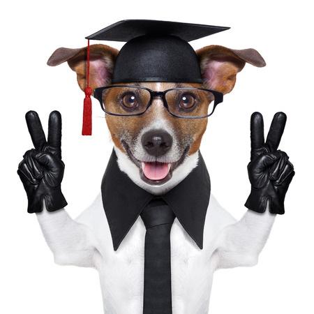 graduate is a dog