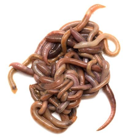 worm farming profits
