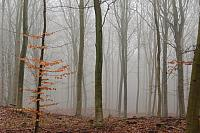 kozzi-8521340-Fog in winter forest-886x586